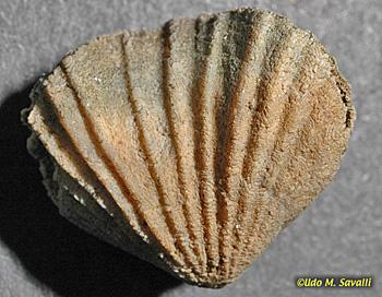 BIO113-Fossils