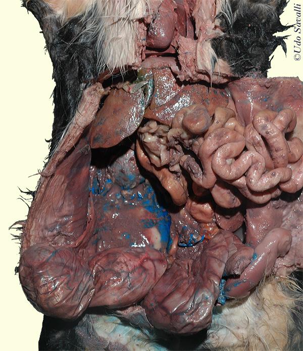 bio202cat organ systems