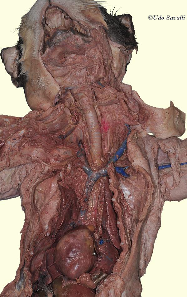 Bio202 Cat Organ Systems