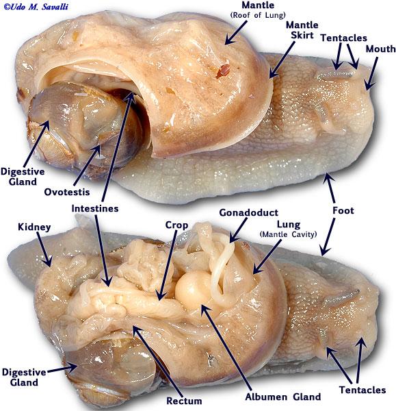 Bio385 Mollusca
